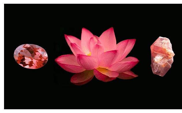 lotus Sapphire